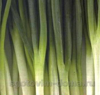 Зеленый лук порей